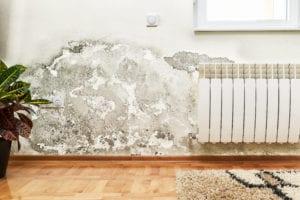 Mold Restoration - Regency DRT